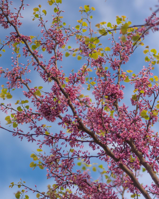 SpringFloralWeb